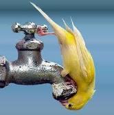 В кочетке нет воды